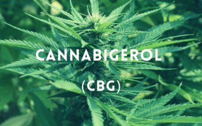 Qu'est-ce que le CBG (Cannabigérol)